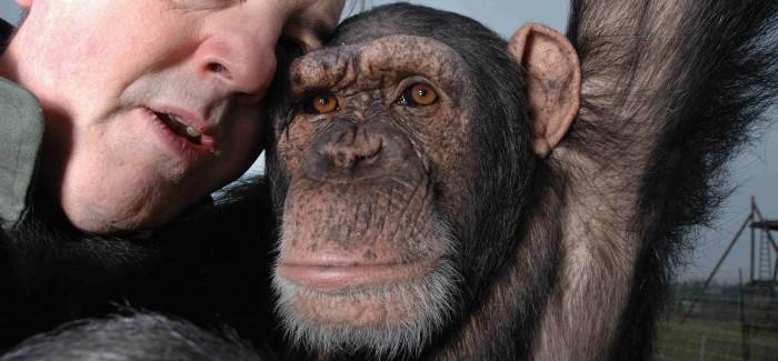 """""""¿Qué son los grandes simios? Personas no humanas que luchan por vivir en un mundo cada vez más limitado"""""""