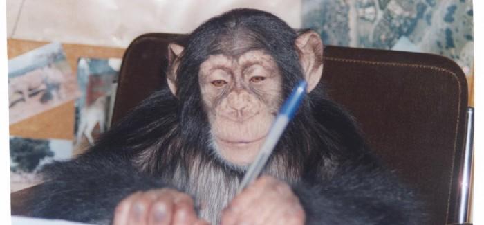 Pedro Pozas y el Proyecto Gran Simio por los derechos de chimpancés, gorilas, orangutanes y bonobos
