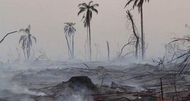 Desastres ambientales producidos por el cambio climático.