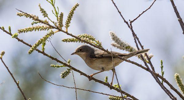 El Aula de Educación Ambiental de Alcobendas enseñará a identificar las aves urbanas
