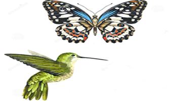 Cambio climático y demás crisis ecológicas o la leyenda del colibrí y el efecto mariposa