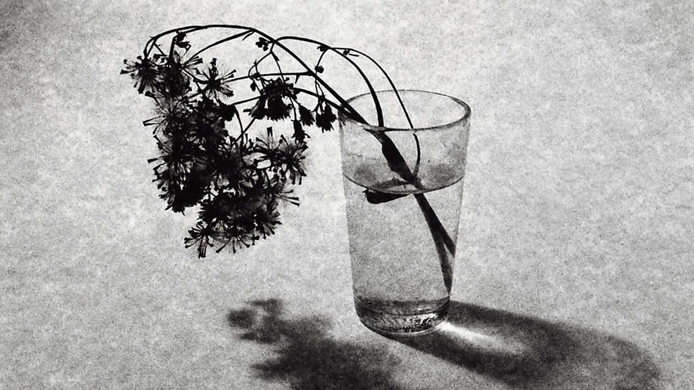 naturalezas-muertas-fotografia-de-tony-catani