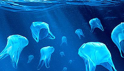 Greenpeace ha iniciado la campaña 'No más plásticos en nuestra comida'