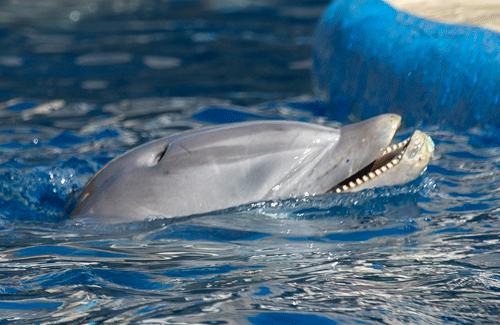 Proyecto Gran Simio denuncia al Zoo Aquarium de Madrid por supuesto maltrato a sus delfines