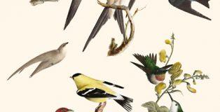 Nocturna Ediciones publica la última novela de Luisa Etxenike, Aves del paraíso.