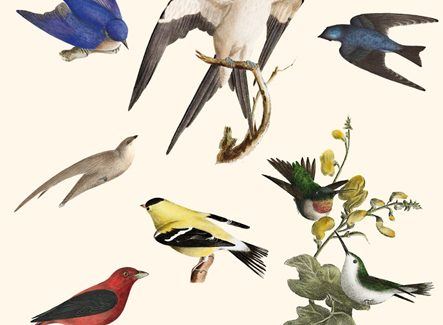 Nocturna Ediciones publica la última novela de Luisa Etxenike, 'Aves del paraíso'
