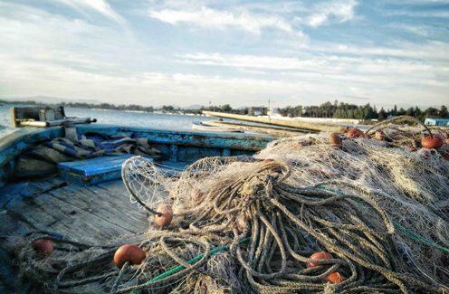 Redes vacías: la sobreexplotación de los recursos pesqueros y la pesca ilegal